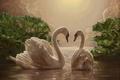 Картинка Лебеди, вечер, двое, романтика, картина