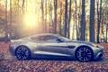 Картинка солнце, martin, Aston, лес