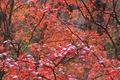 Картинка дерево, осень, ветки, снег, листья