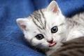 Картинка Котенок, кошка, кот