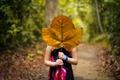 Картинка лес, девушка, лист