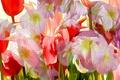Картинка цветы, штрих, рендеринг, краски, лепестки, линии