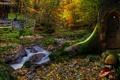 Картинка лес, листья, деревья, дом, грибы, склон, дверь, фонарь