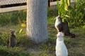 Картинка Коты, Наблюдения, Охота