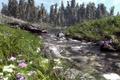 Картинка цветы, ель, арт, природа, хвойные, деревья, полевые, речка, трава, река, камни