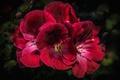 Картинка лепестки, соцветие, цветок
