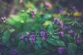 Картинка цветы, IrinaJoanne, природа
