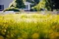 Картинка трава, макро, боке
