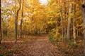 Картинка forest, leaves, fall, тропа, path, листва, Autumn, осень, листопад, дорожка, лес