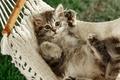 Картинка гамак, лапы, кот