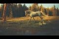 Картинка лес, природа, утки, лошадь, пруд, by Neverrmind