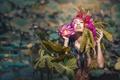 Картинка девушка, цветы, лотос, солнечный свет