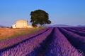 Картинка дерево, домик, поле, голубое, Франция, небо, лаванда