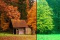 Картинка Лес, Лето, Осень
