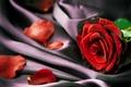 Картинка красная, лепестки, крупным планом, ткань, роза